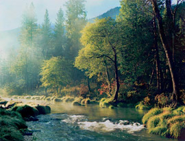 Misty Morning, Indian Creek, Northern Sierra Nevada Mountains, California, 1983 by Philip Hyde. The original color transparency went missing and this image has not been printed or published for over 20 years. With the digital age it can again be printed. West Coast Imaging produced the new file from a scan by their Creo CCD Flatbed Scanner of a Philip Hyde original dye transfer print.