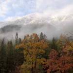 Oaks, Grizzly Ridge, Fall, Northern Sierra Nevada, California, copyri