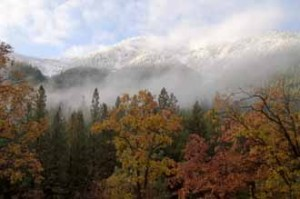 Oaks, Grizzly Ridge, Fall, Northern Sierra Nevada, California, copyright 2012 by David Leland Hyde.