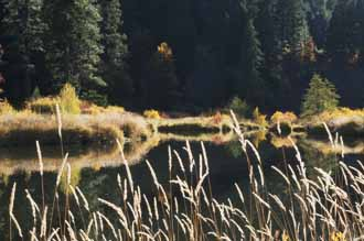 Grasses, Indian Creek Below Indian Valley, Northern Sierra Nevada, California, Fall, copyright 2012 by David Leland Hyde.