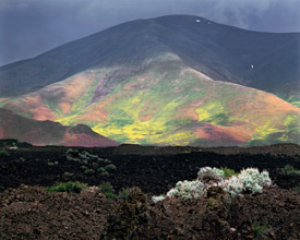 Lava, Flowers, Craters Of The Moon National Monument, Idaho, copyright 1983 by Philip Hyde.