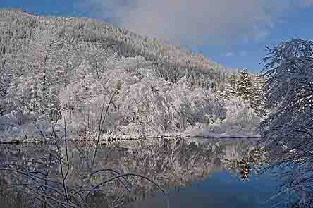 Willow, Alder, Indian Creek, Fresh Snow, Plumas County, Northern Sierra, California, copyright 2013 David Leland Hyde.