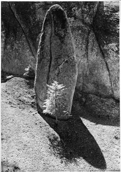 Granite Arrow Shaped Rock, Hemlock Tree, High Sierra Near Matterhorn Canyon, Yosemite National Park, California, 1950.