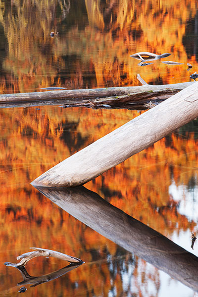 7. Logs And Reflections, Manzanita Lake, Lassen Volcanic National Park, California. This photo was among many I found walking around Manzanita Lake during the evening sun angle when the lake surface appeared to catch fire and glow with the most intensity.