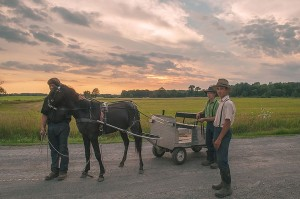 Amish Teenage Brothers and Horse Cart Near Holton, Michigan by David Leland Hyde.